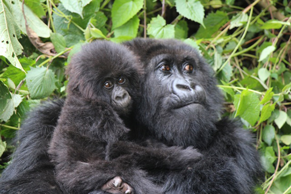 Beyond the Gorilla Experience in Rwanda